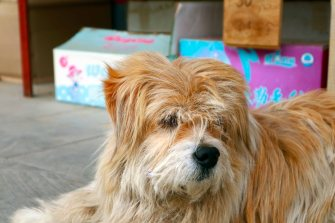 Puppy, Dog, Cute Dog, Long hair dog, China, travel, Temple, Animals, Dog lovers