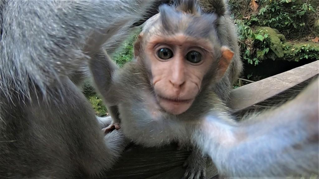Sacred Monkey Temple, Bali Monkey, Discover Bali, Travel Bali, Instagram Bali, Ubud Temple, Ubud