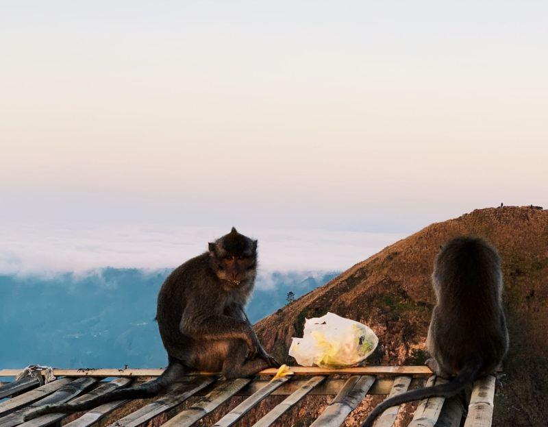 Monkey's in Bali